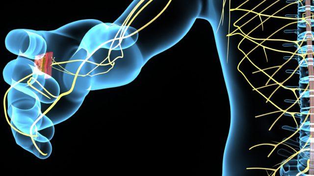 El doctor José Manuel Cervantes Uc, investigador en la Unidad de Materiales del Centro de Investigación Científica de Yucatán, enfoca su investigación en biomateriales para encontrar alternativas para las personas que presentan trastornos en los nervios periféricos, padecimiento por el cual no experimentan ninguna sensación en sus extremidades. (Foto: Shutterstock.)