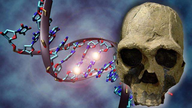 El DNA antiguo de las poblaciones prehispánicas se puede extraer de los huesos o de los tejidos, por ejemplo, de una momia, y dependiendo de la degradación de estos es posible o no obtener el DNA, en este caso mitocondrial. (Imagen: tomada de www.ancient-origins.es.)