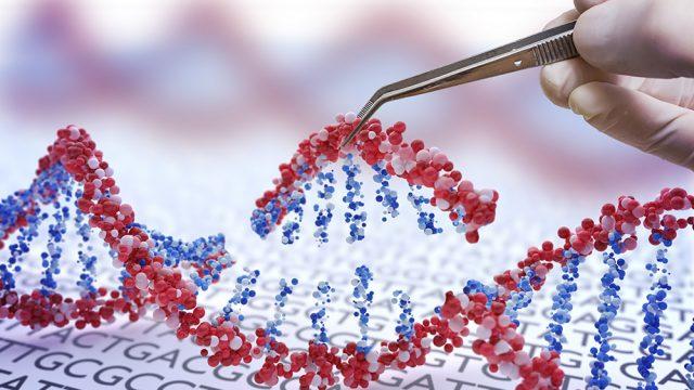 Una ola de críticas y reacciones de la comunidad científica internacional provocó la noticia dada a conocer por el investigador chino He Jiankui, quien aseguró haber modificado el ADN, utilizando la técnica de CRISPER-Cas, de unas gemelas nacidas hace unas semanas para que fueran resistentes a una eventual infección por VIH. (Foto: Shutterstock.)