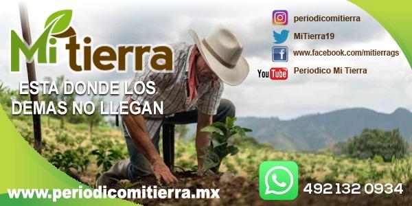 http://www.periodicomitierra.mx/